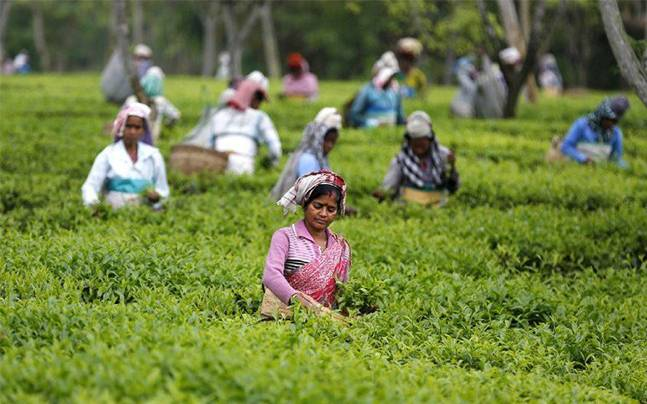 Tea entrepreneurs and workers reach 3-point agreement; protest called off