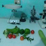 Quarantine-laboratory-vegetable