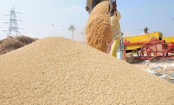 Govt to purchase 30,000 metric tonnes of paddy in first phase