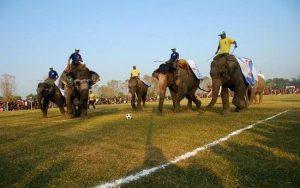 Elephant_Festival_sauraha